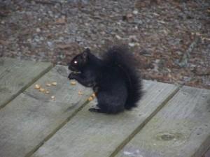 rsz_squirrel