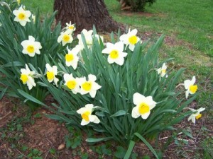 rsz_easter_flowers